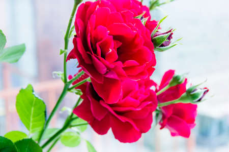 Bouquet of pink and red roses Imagens