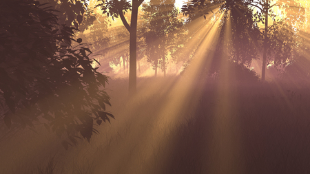 3D graphics. picture. sunrise in the forest. the suns rays