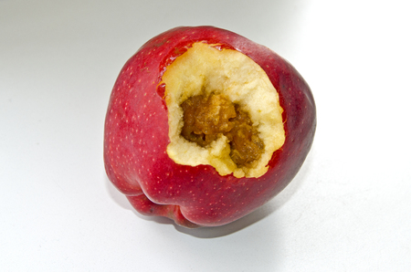 Red, juicy apple rotten inside
