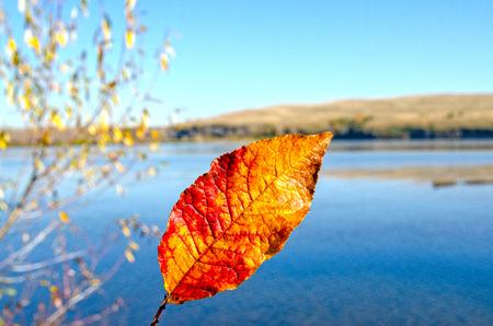 Autumn, fiery red leaf