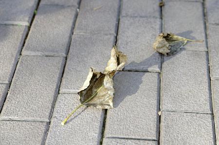 Autumn, dry leaf lies on the sidewalk