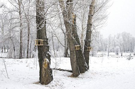 several bird feeders in the winter forest