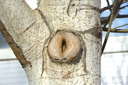 Hollow in the tree, in the form of the female genitals Banco de Imagens
