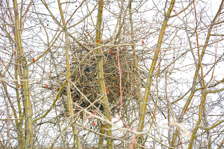 birds nest woven on the top of a tree