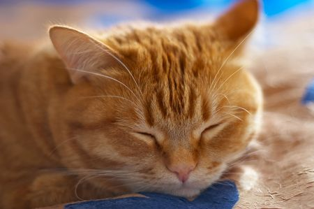dozing: A quiet dozing lovely cat before his night hunter. Stock Photo