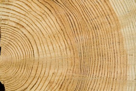 unprocessed: Structure of a tree. The tree is good stuff for construction Stock Photo