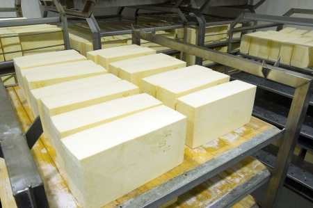 Industrial production of hard cheeses Stock Photo