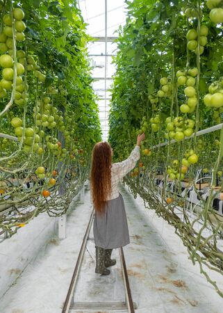 Scientist inspecting plants. Woman agronomist in greenhouse. Portrait of a Young Female Working in the Garden Center. Woman scientist Imagens