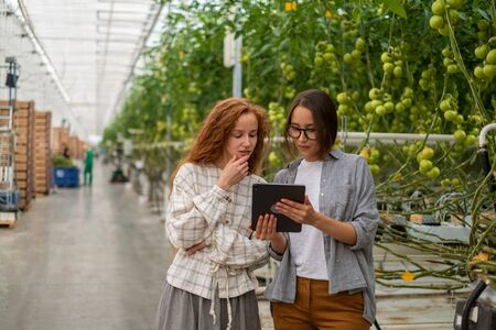 Couple of workers working with digital tablet supervising the growing of plants in the greenhouse of the plants production Фото со стока