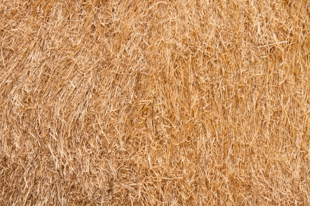 beige brown closeup yellow haystack straw photo