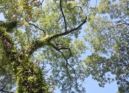 overlook: green tree and blue sky overlook Stock Photo