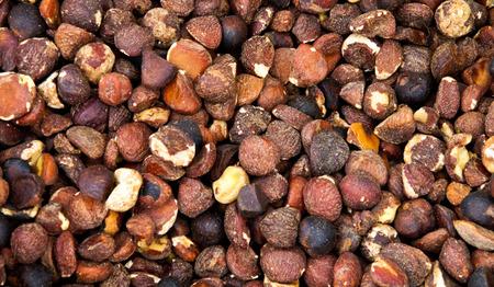 Peel of bitter tea oil seeds photo