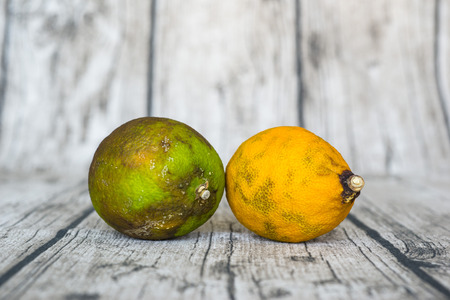 hideous: rotten green and yellow lemon put on wooden table
