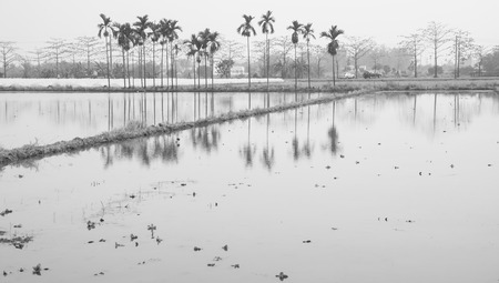 restful: restful view of paddy field with water reflection Stock Photo