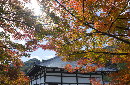 Japanese temple with red maple leaf under the sun