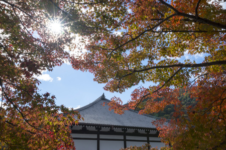 Japanese temple with red maple leaf under the sun Standard-Bild - 120408915