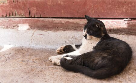 Black and white cat lying on the ground and sleeping