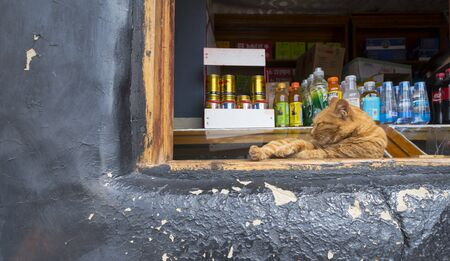 Orange cat lying on the windowsill and sleeping