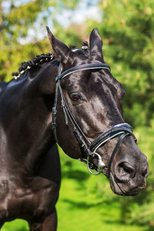 Close-up of stallion with mane  against greenery in spring. Stok Fotoğraf