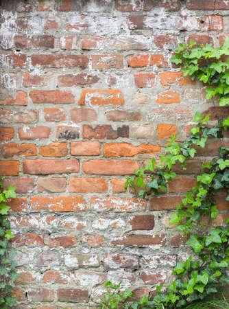 foliage on a brick wall texture