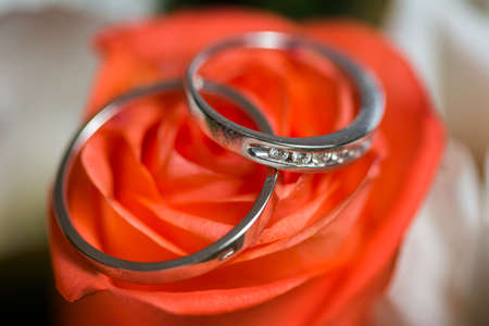 Beautiful shiny wedding rings with diamonds on the pink rose