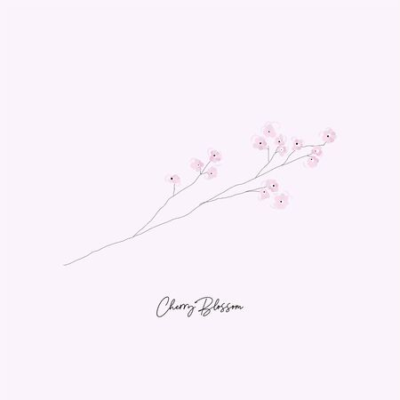hand drawn Cherry Blossom Floral tree branch illustration
