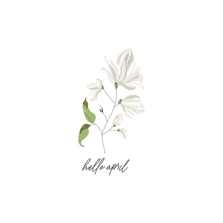 magnolia branch blossom flowers and calligraphic text hello April