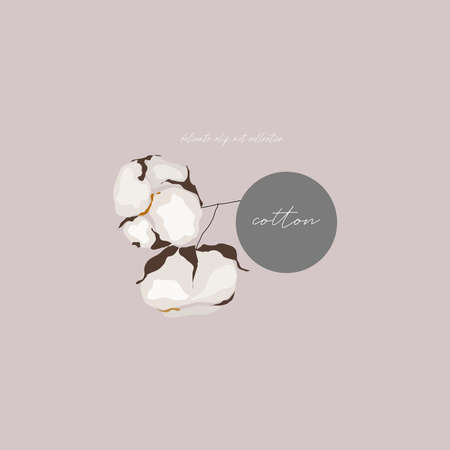 cotton bloom flower branch illustration