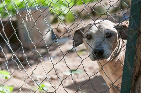 animal sad face: Stray dog behind the corral of a dog refuge