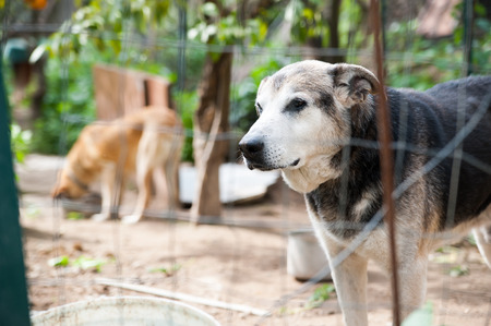 refuge: Stray dog behind the corral of a dog refuge