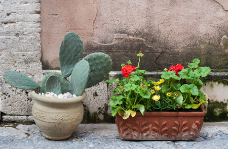 folkloristic: Folkloristic disposition of some flowered vases along the alleys of Ortigia, the old part of Syracuse