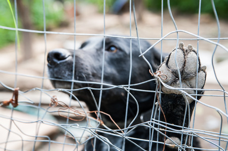 corral: Close up view of the paw of a stray dog behind the corral of a dog refuge Stock Photo