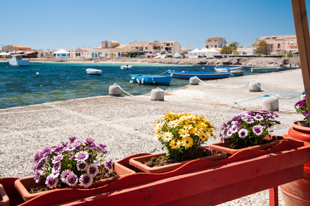 Flowered vases next to the harbor of the small sea village Marzamemi, Sicily, with fishing boats