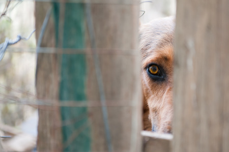 corral: Scared stray dog looking behind the corral of a dog refuge