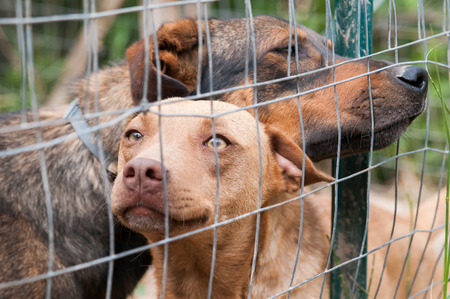 corral: Stray dogs behind the corral of a dog refuge