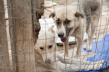 corral: Stray dog behind the corral of a dog refuge