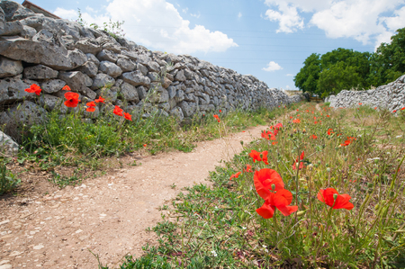 dry stone: Country road and flowering puppies with dry stone walls in the fields of the province of Ragusa, Sicily