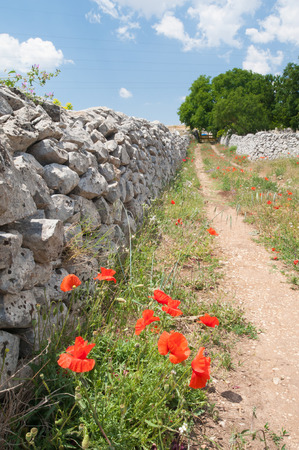 ragusa: Country road and flowering puppies with dry stone walls in the fields of the province of Ragusa, Sicily