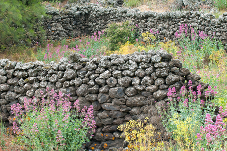 springy: Ruins of an old lava stone house and typical vegetation of Mount Etna Stock Photo