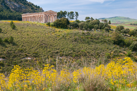 segesta: Yellow ferula plant in a springy day and the hill with the temple of Segesta in the background, West Sicily