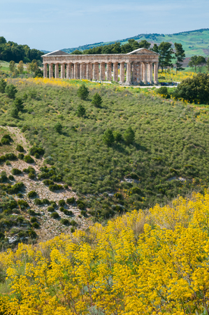 springy: Yellow ferula plant in a springy day and the hill with the temple of Segesta in the background, West Sicily
