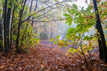 View of chestnut trees and a path in Mount Etna park during fall season Stock Photo