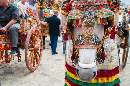 folkloristic: Close up view of the horse of a siclian cart and its ornamental harness
