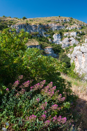 valerian plant: Valerian plant and green vegetation in Pantalica valley, Sicily, and a view of rocky tombs in the distance