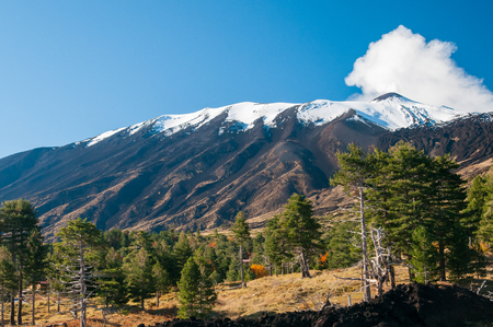 volcano slope: View of some pine trees in the northern side of Mount Etna and the snowy peak