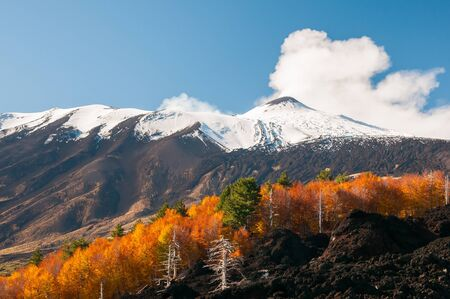 Beech trees on the northern side of Mount Etna and the snowy peak Фото со стока