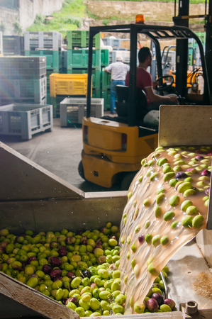 oil mill: The process of cleaning the olives in a modern oil mill Stock Photo