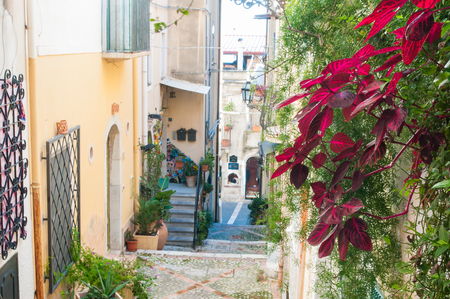 flowered: Flowered Iresine plant along a typical narrow alley of Taormina, Eastsicily