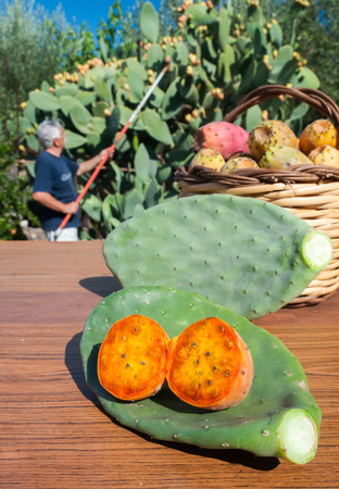 wicker work: Cut in half prickly pear, cactus leave and a wicker basket full of just picked prickly pears and a picker at work in the background