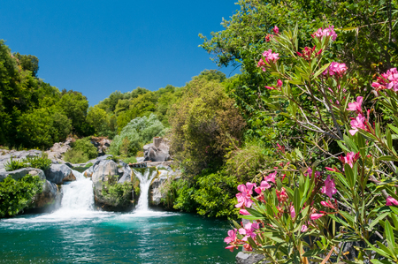 natural pool: Oleander plant, a natural pool and a fall of the Alcantara river park, Sicily